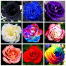 100Pcs Rose Bonsai Multiple Colour To Choose Potted Flower Seed For Home Garden Plants