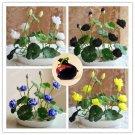 10Pcs Mix Color Bowl Lotus Hydroponic Plants Aquatic Seeds For Home Garden Plants