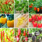 100 PCS/Bag 13 Varieties of Garden Vegetables and red Yellow Green Purple Black White Pepper seeds