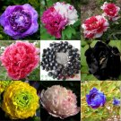 15 pcs peony Bonsai 24 kinds to choose, outdoor perennial flower Plants for home garden Seeds