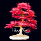 20 Pcs/Pack Potted plant Plantas American blood red Maple Tree floresling Bonsai Plants Seeds