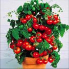 100 Pcs Bonsai tomato Plants Potted Bonsai Balcony fruit Vegetable plant Seeds