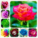 200 Pcs mixed color rare rose Plants bonsai plant flower Plantas for home garden rainbow Seeds