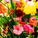 100Pcs Wildflower Plants Bonsai Plant flower Plantas for home garden Seeds