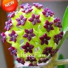 100Pcs Hoya flores,Potted Flowers Bonsai plants Hoya plantas, Orchid plante DIY Home Garden Seeds
