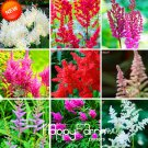 100Pcs Astilbe Chinensis Bonsai Balcony Garden Potted Chinese Astilbe Flower Plants Seeds