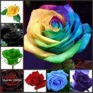 400Pcs Mixed Very rare Blood Black Rose Plants Rare Flowers Plantas Seeds