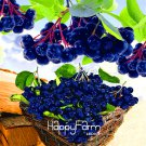 100Pcs Annual Fruit and Vegetable Plants Aronia Viking.DIY Home Garden Seeds