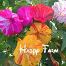 20Pcs Flower Bonsai portfolio Mirabilis jalapa, colorful fragrant jasmine Plants Seeds