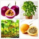 20Pcs Passion Fruit(Passiflora edulis)Plants,Rare tropical and subtropical fruit Organic Seeds