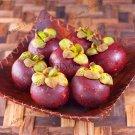 10Pcs Thailand Mangosteen Plants Bonsai Natural Anticancer Queen Of Tropical Fruit Seeds