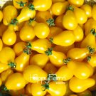 100Pcs  Yellow Pear Tomato Bonsai,Potted Organic Vegetable Fruit Tomato Plants for Home Garden Seeds