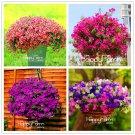 100Pcs Petunia floresling Mix Petunia Hybrida Plants hanging petunia Plantas Seeds