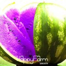 50 Pieces Rare Purple Flesh Watermelon Bonsai Super Big Water Melon Plants Seeds
