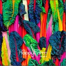 100 Pieces Five Colors Swiss Chard Silverbeet Fast Growing Edible Plant Vegetable Seeds