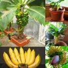 200 Pieces Banana Bonsai,dwarf fruit trees,Milk Taste Seeds