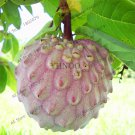 2 Pieces Custard Apple Fruit Buddha's Head Fruit Cherimoya Tropical Sugar Seeds
