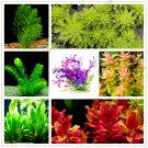 100 Pieces mixed species water plants fish tank aquarium grass garden aquarium plants Seeds