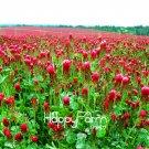100 Pieces Crimson Clover, flower Plants Garden decoration leader Potted plant Seeds