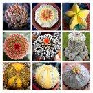 200 Pieces Mix Lithops flores Living Stones Succulent Cactus Organic Garden Seeds