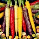 100 Pieces Carrot bonsai,fruit vegetable flores, Nutrition, organic,Seeds
