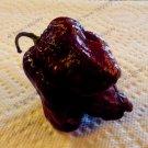 100 Pieces Rare Spicy Scorpion Pepper bonsai flores Seeds