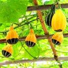 30 Pieces Most Watched Value of Pumpkin bonsai Mandarin Duck Pear Pumpkin Seeds