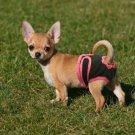 S-XL Female Pet Dog Pants Bitch Heat In Season Menstrual Sanitary Nappy Diaper