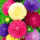 Hot Sale!200 pcs/bag Multi color aster bonsai, Chinese chrysanthemum f