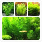 500 Pcs New Aquarium Grass Bonsai Water Aquatic Plant Bonsai Family Fo