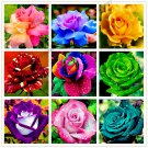 200 pcs Rare Holland Rainbow Rose Flower bonsai Home Garden Rare Flowe