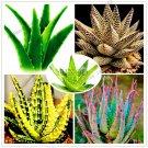 100pcs/bag Aloe vera flores,rare herb plantas Tree plante bonsai plant