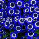 100 pcs/bag Mixed color Bonsai Florists Cineraria Flower Perennial Bon