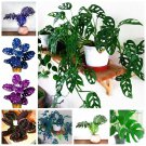 100 Pcs/ bag Rare Palm Turtle Leaves Monstera Bonsai Outdoor Potted Pl
