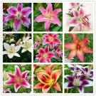 100pcs / bag 24 colors lily bonsai, cheap perfume lilies plant for Gar