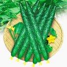Cucumber Cucumis Sativus Cuke bonsai Vegetable bonsai 20pcs-in Bonsai