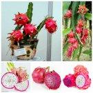100% Real Dragon Fruit Bonsai White And Red Pitaya Bonsai For Home Gar