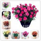 New Arrival! 50 Pcs Mini Carnations Bonsai Balcony Potted Plants Diant