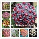 Hot ! 100 Pcs Rare Hoya Bonsai Flower For Home Garden, Ball Orchid Per
