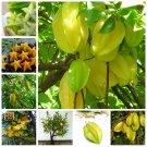 Organic 50 pcs/ bag Imported Carambola Bonsais Star Fruit Tree Shrub F