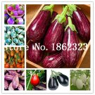 100 pcs Rare eggplant bonsai, flower potted plant, garden fruit trees,