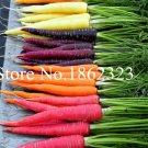200 pcs/bag Carrot bonsai Organic fruit vegetables plants Easy to grow