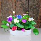 Heirloom 100% Real 5 Pcs Bowl Lotus Water Lily Aquatic Plants Home Gar