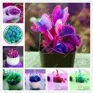 200 Pcs Carnivorous Garden Potted Flytrap Bonsai plantflower Dionaea M