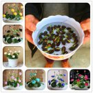 5 Pcs/Bag Lotus Flower, Mini Lotus Bonsai Aquatic Plants Bowl Lotus Wa
