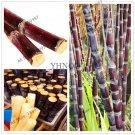 Succulent sugar cane bonsai 100 particles delicious Vegetable and frui