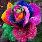 50pcs Bonsai MIX Beautiful Rainbow Rose Balcony Flower plant Potted Bo