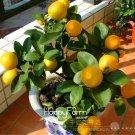 New 2018!50 pieces /Lot ,Lemon bonsai, potted balcony, planting season