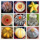 200pcs Cactus Lithops Living Stones Flowers Mix Succulent Organic Bulk
