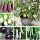 Hot Sale!100Pieces/Bag delicious Purple Eggplant bonsai flores Vegetab